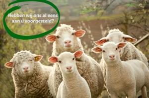 shutterstock_104360954 kudde schapen